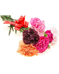 Mixed Color Carnations